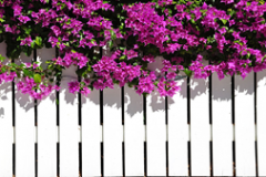 Should You Paint Or Stain A Wooden Fence?